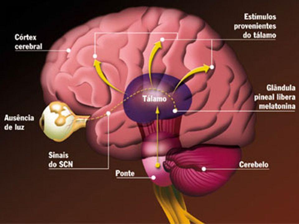 O sono e o estresse - um binômio desconfortante O estresse afeta a qualidade do sono e a má qualidade do sono favorece o estresse, mantendo um moto-contínuo destrutivo.