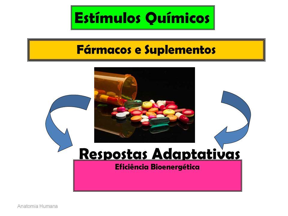Anatomia Humana Estímulos Químicos Fármacos e Suplementos Respostas Adaptativas Eficiência Bioenergética