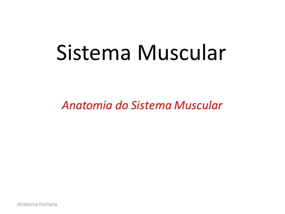 Anatomia Humana Sistema Muscular Anatomia do Sistema Muscular