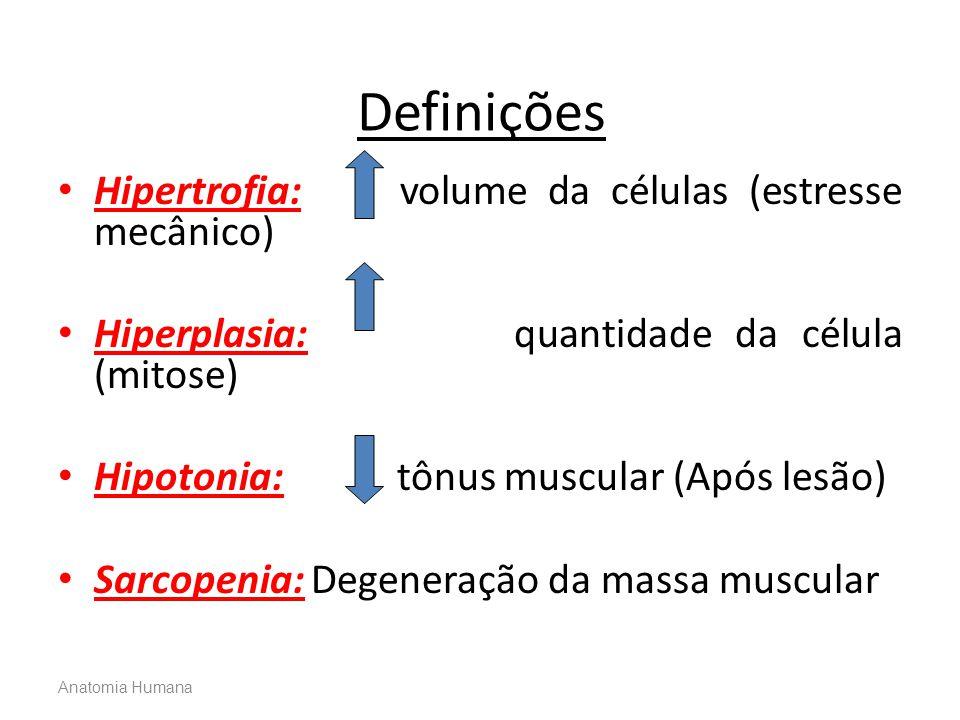 Anatomia Humana Definições • Hipertrofia: volume da células (estresse mecânico) • Hiperplasia: quantidade da célula (mitose) • Hipotonia: tônus muscul