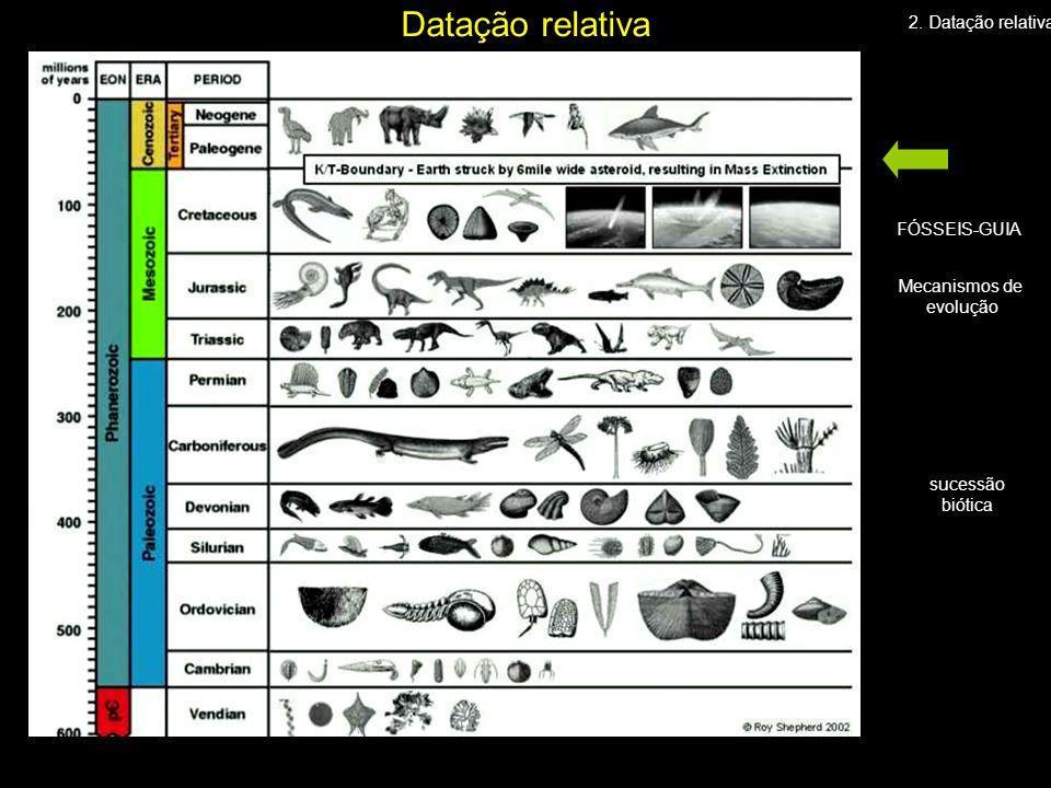 Mecanismos de evolução sucessão biótica FÓSSEIS-GUIA 2. Datação relativa Datação relativa