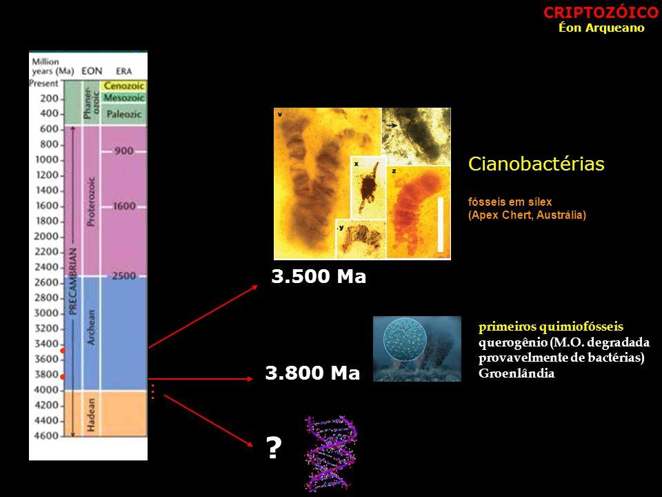 fósseis em sílex (Apex Chert, Austrália) primeiros quimiofósseis querogênio (M.O. degradada provavelmente de bactérias) Groenlândia 3.500 Ma Cianobact