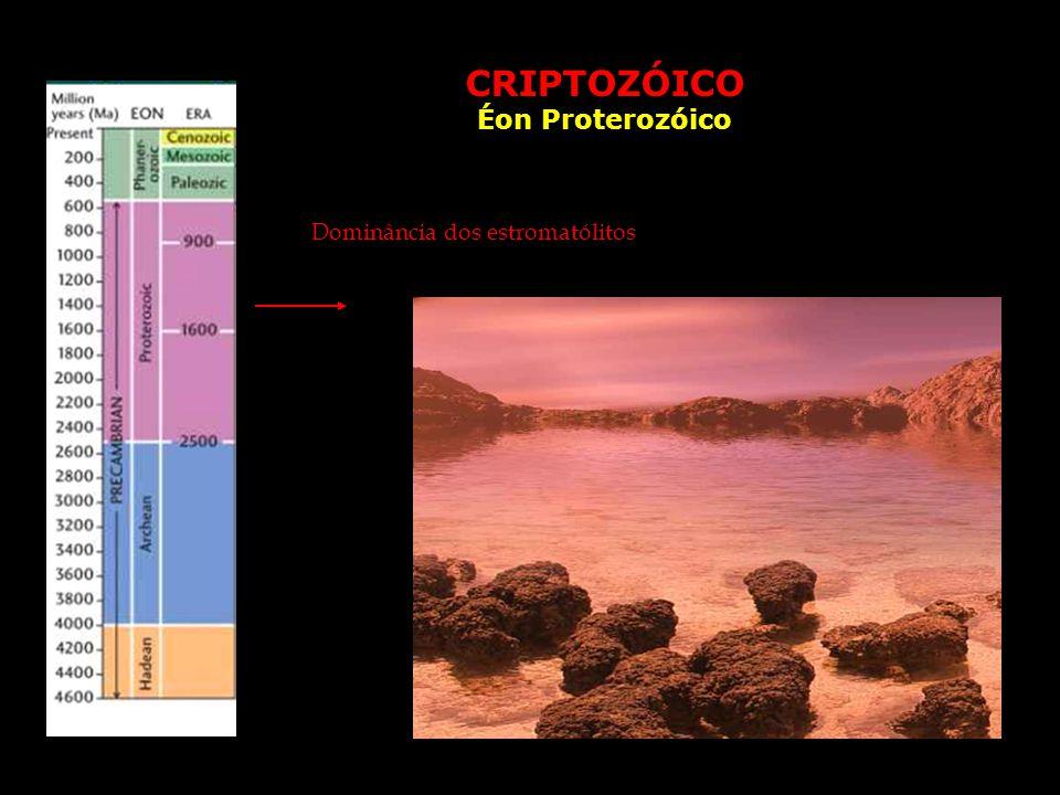 CRIPTOZÓICO Éon Proterozóico Dominância dos estromatólitos