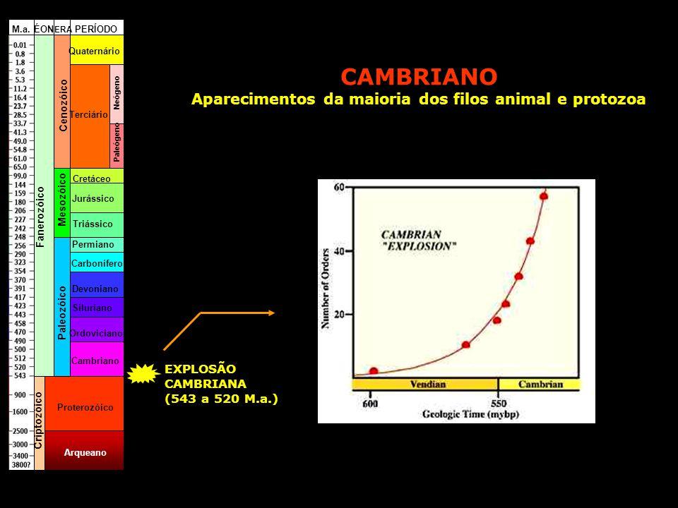 Cambriano Ordoviciano Siluriano Devoniano Carbonífero Permiano Triássico Jurássico Cretáceo Terciário Quaternário Paleógeno Neógeno Fanerozóico Cripto