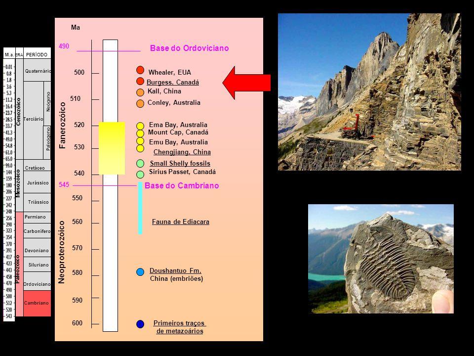Base do Ordoviciano Whealer, EUA Burgess, Canadá Kall, China Conley, Australia Ema Bay, Australia Mount Cap, Canadá Emu Bay, Australia Chengjiang, Chi