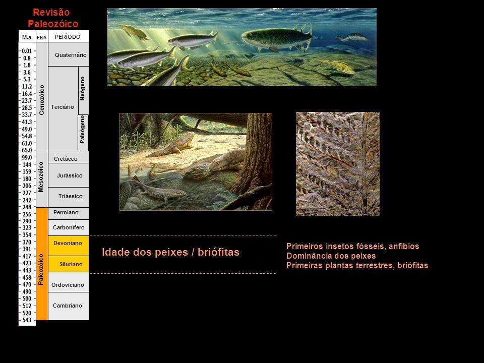 Fanerozóico Cambriano Ordoviciano Siluriano Devoniano Carbonífero Permiano Triássico Jurássico Cretáceo Terciário Quaternário Paleógeno Neógeno Paleozóico Mesozóico Cenozóico ERA PERÍODO M.a.