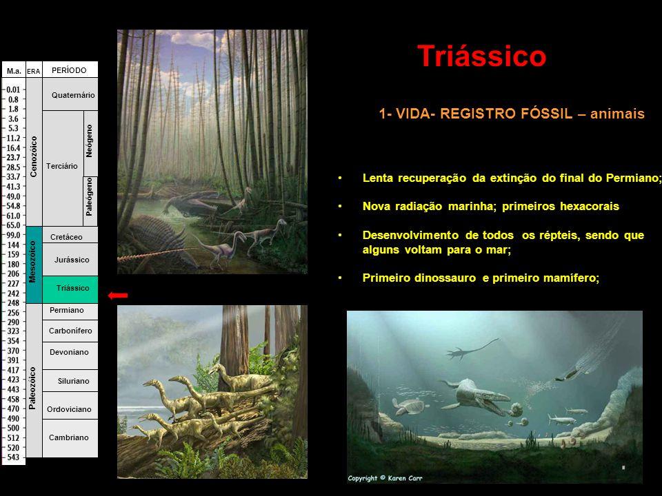 1- VIDA- REGISTRO FÓSSIL – animais •Lenta recuperação da extinção do final do Permiano; •Nova radiação marinha; primeiros hexacorais •Desenvolvimento de todos os répteis, sendo que alguns voltam para o mar; •Primeiro dinossauro e primeiro mamífero; Fanerozóico Cambriano Ordoviciano Siluriano Devoniano Carbonífero Permiano Triássico Jurássico Cretáceo Terciário Quaternário Paleógeno Neógeno Paleozóico Mesozóico Cenozóico ERA PERÍODO M.a.