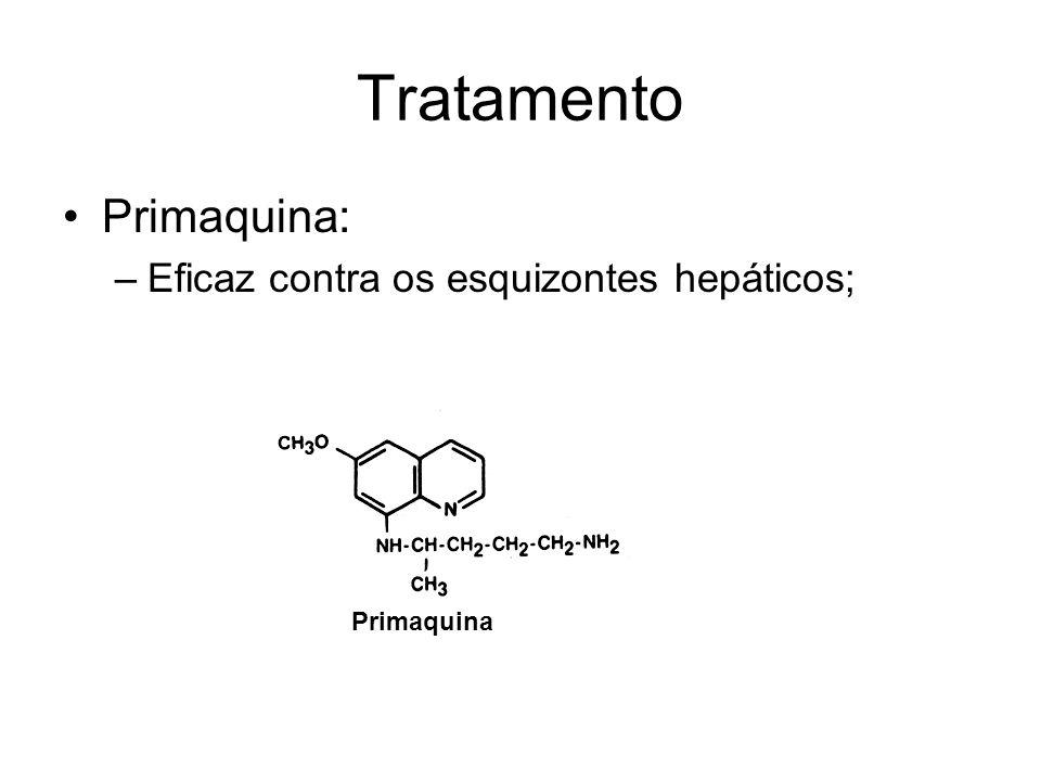 Tratamento •Primaquina: –Eficaz contra os esquizontes hepáticos; Primaquina