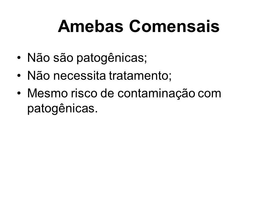 Amebas Comensais •Não são patogênicas; •Não necessita tratamento; •Mesmo risco de contaminação com patogênicas.