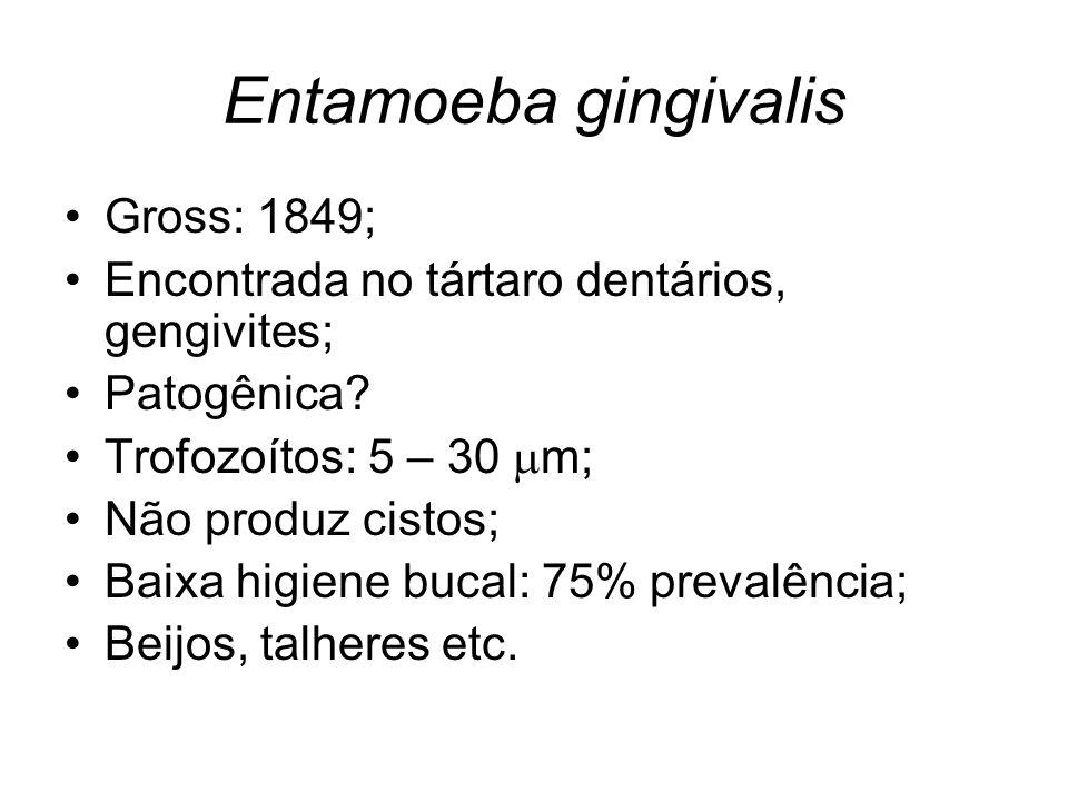 Entamoeba gingivalis •Gross: 1849; •Encontrada no tártaro dentários, gengivites; •Patogênica? •Trofozoítos: 5 – 30  m; •Não produz cistos; •Baixa hig