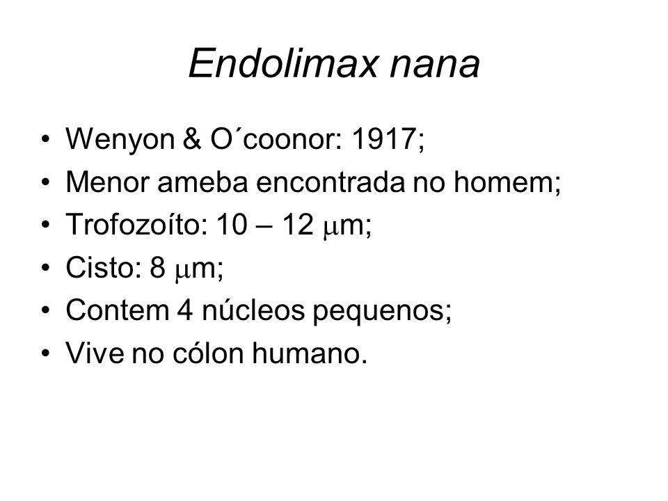 Endolimax nana •Wenyon & O´coonor: 1917; •Menor ameba encontrada no homem; •Trofozoíto: 10 – 12  m; •Cisto: 8  m; •Contem 4 núcleos pequenos; •Vive