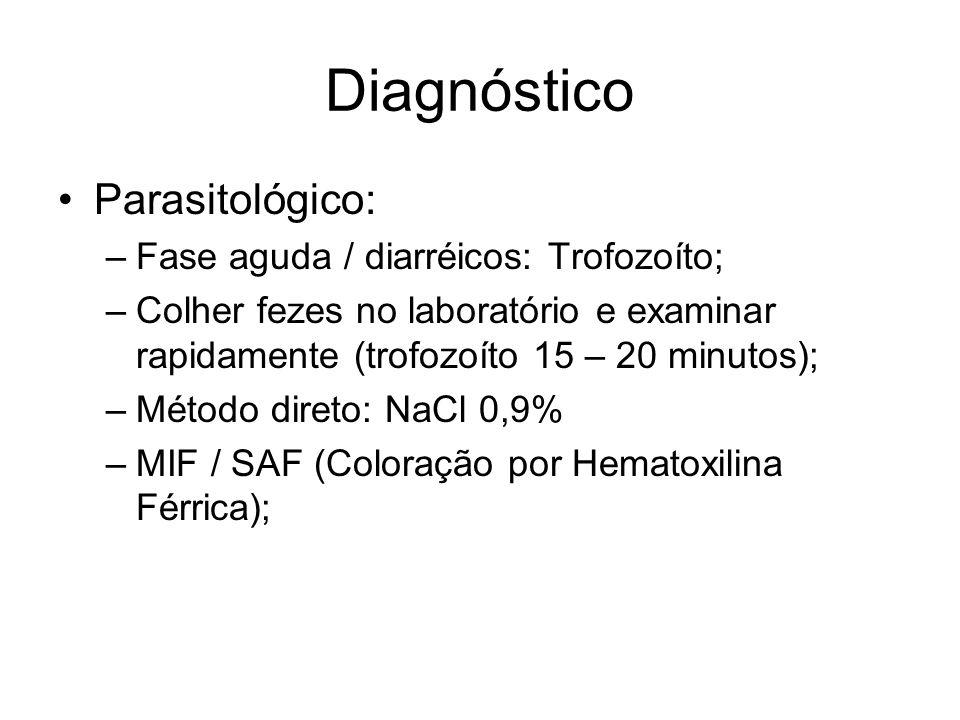 Diagnóstico •Parasitológico: –Fase aguda / diarréicos: Trofozoíto; –Colher fezes no laboratório e examinar rapidamente (trofozoíto 15 – 20 minutos); –
