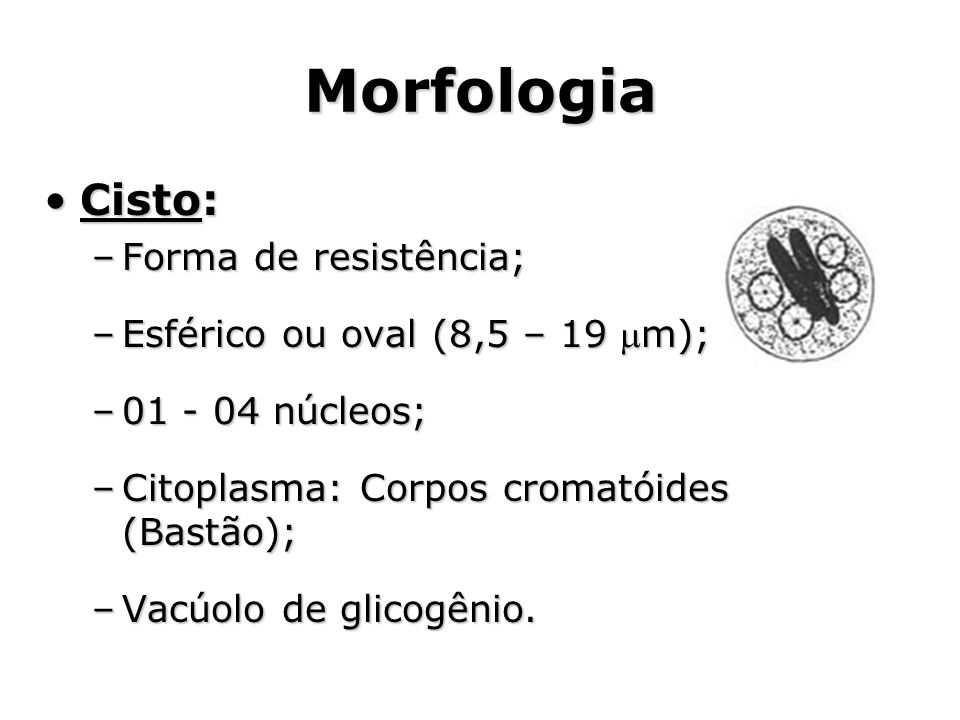 Morfologia •Cisto: –Forma de resistência; –Esférico ou oval (8,5 – 19 m); –01 - 04 núcleos; –Citoplasma: Corpos cromatóides (Bastão); –Vacúolo de gli