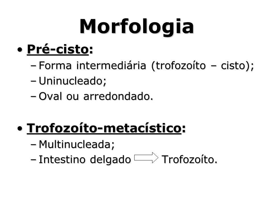Morfologia •Pré-cisto: –Forma intermediária (trofozoíto – cisto); –Uninucleado; –Oval ou arredondado. •Trofozoíto-metacístico: –Multinucleada; –Intest