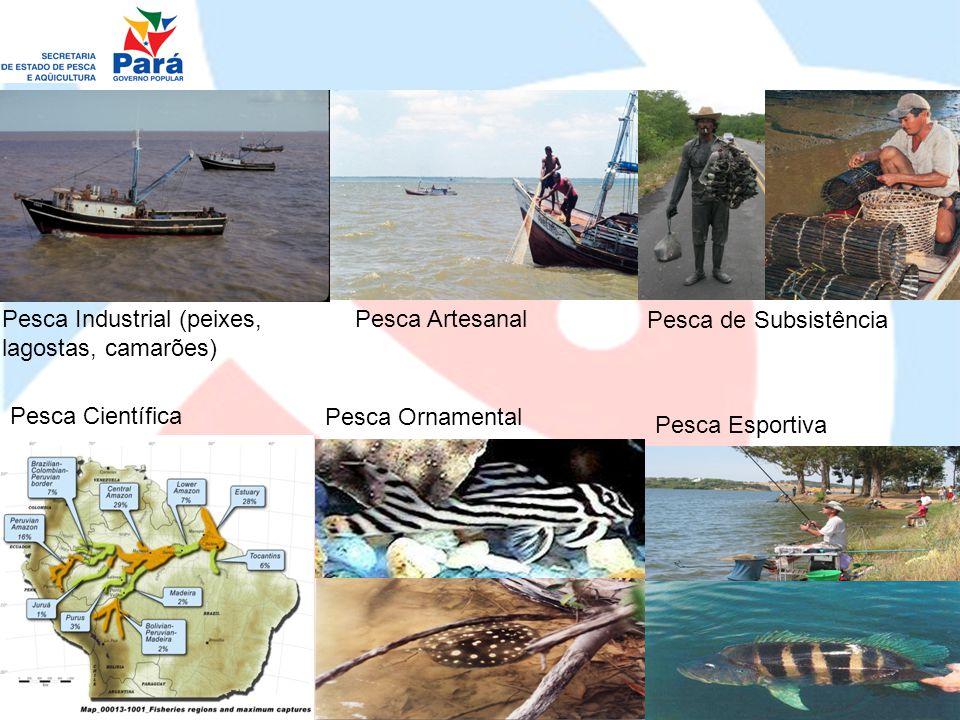Maricultura: ostras Piscicultura em Tanques-rede Estações de Alevinagem Piscicultura de Água doce Jacaricultura Quelidicultura Carcinicultura marinha e de água doce