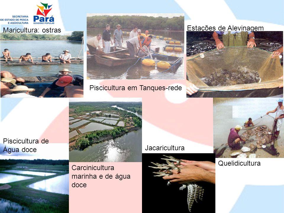 Obrigada!!  (91) 3222-8310/3241-2840/3241-2452/9112-6173 E.mail: socorro.pena@sepaq.pa.gov.br