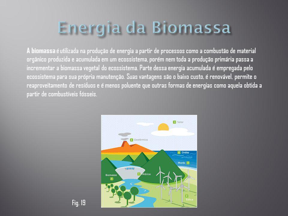A biomassa é utilizada na produção de energia a partir de processos como a combustão de material orgânico produzida e acumulada em um ecossistema, por