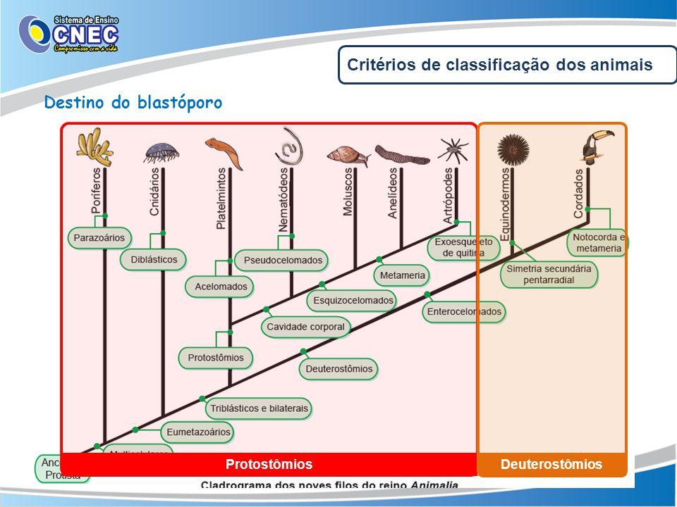 Protostômios Deuterostômios Critérios de classificação dos animais Destino do blastóporo
