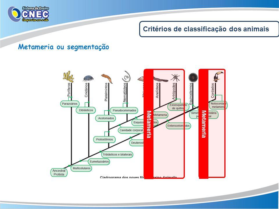 Metameria ou segmentação Metameria Critérios de classificação dos animais