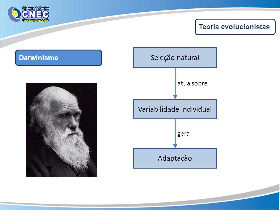 Teoria evolucionistas Darwinismo Variabilidade individual Seleção natural Adaptação atua sobre gera