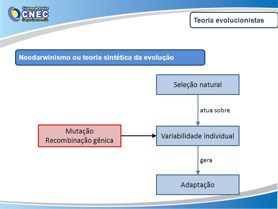 Teoria evolucionistas Neodarwinismo ou teoria sintética da evolução Variabilidade individual Seleção natural Adaptação atua sobre gera Mutação Recombi
