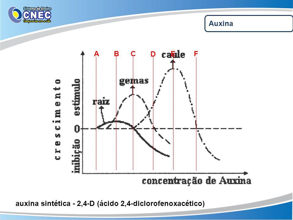 Auxina A B C D EF auxina sintética - 2,4-D (ácido 2,4-diclorofenoxacético)