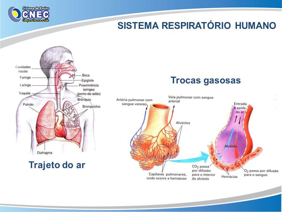 SISTEMA RESPIRATÓRIO HUMANO Trajeto do ar Trocas gasosas