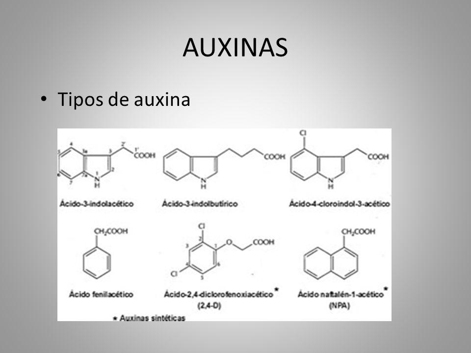 AUXINAS • Tipos de auxina
