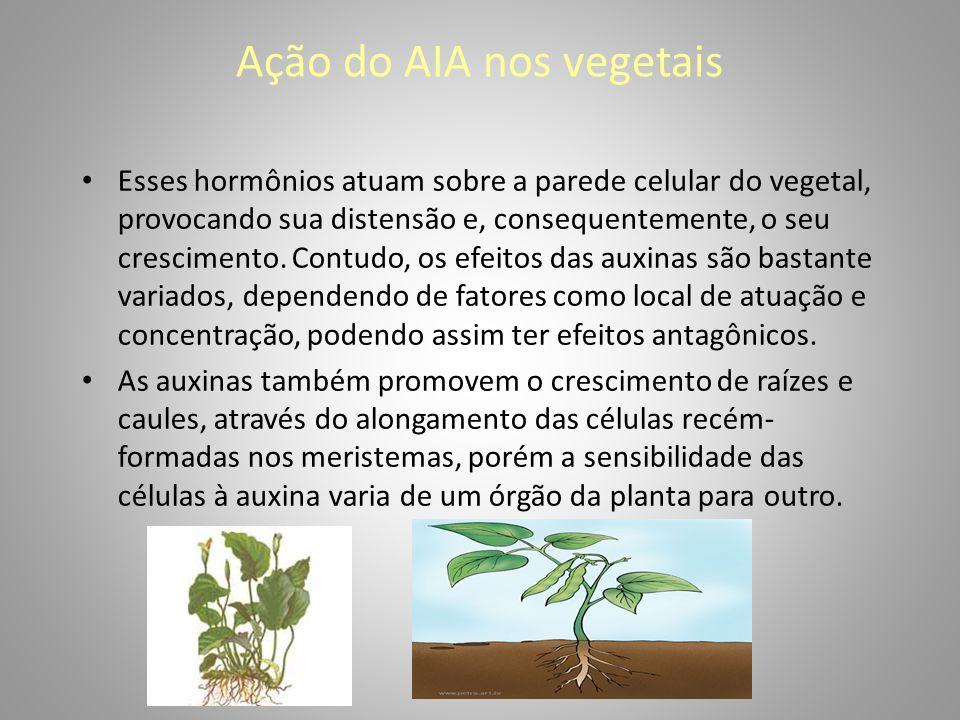 Ação do AIA nos vegetais • Esses hormônios atuam sobre a parede celular do vegetal, provocando sua distensão e, consequentemente, o seu crescimento. C