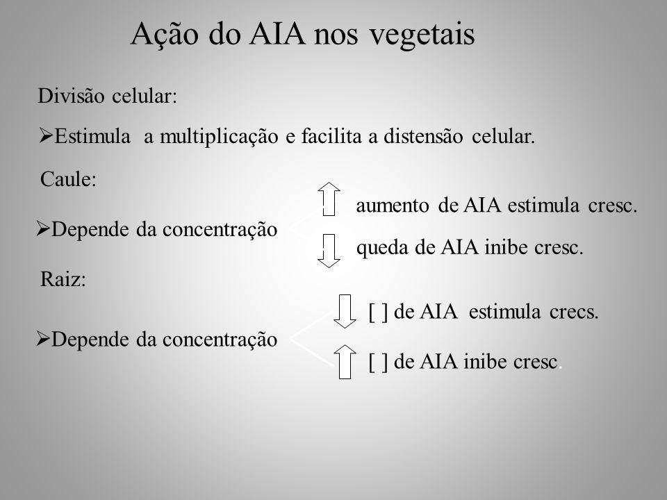  Depende da concentração aumento de AIA estimula cresc. queda de AIA inibe cresc.  Depende da concentração [ ] de AIA estimula crecs. [ ] de AIA ini