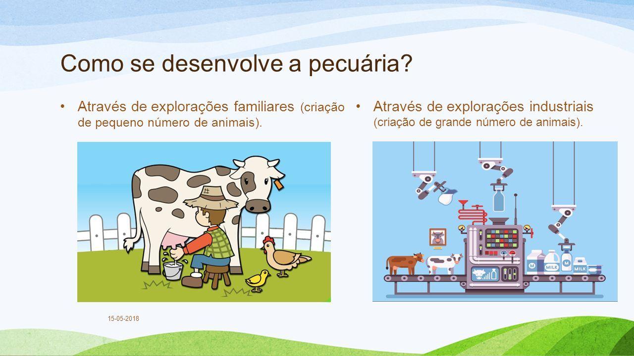 Como se desenvolve a pecuária.