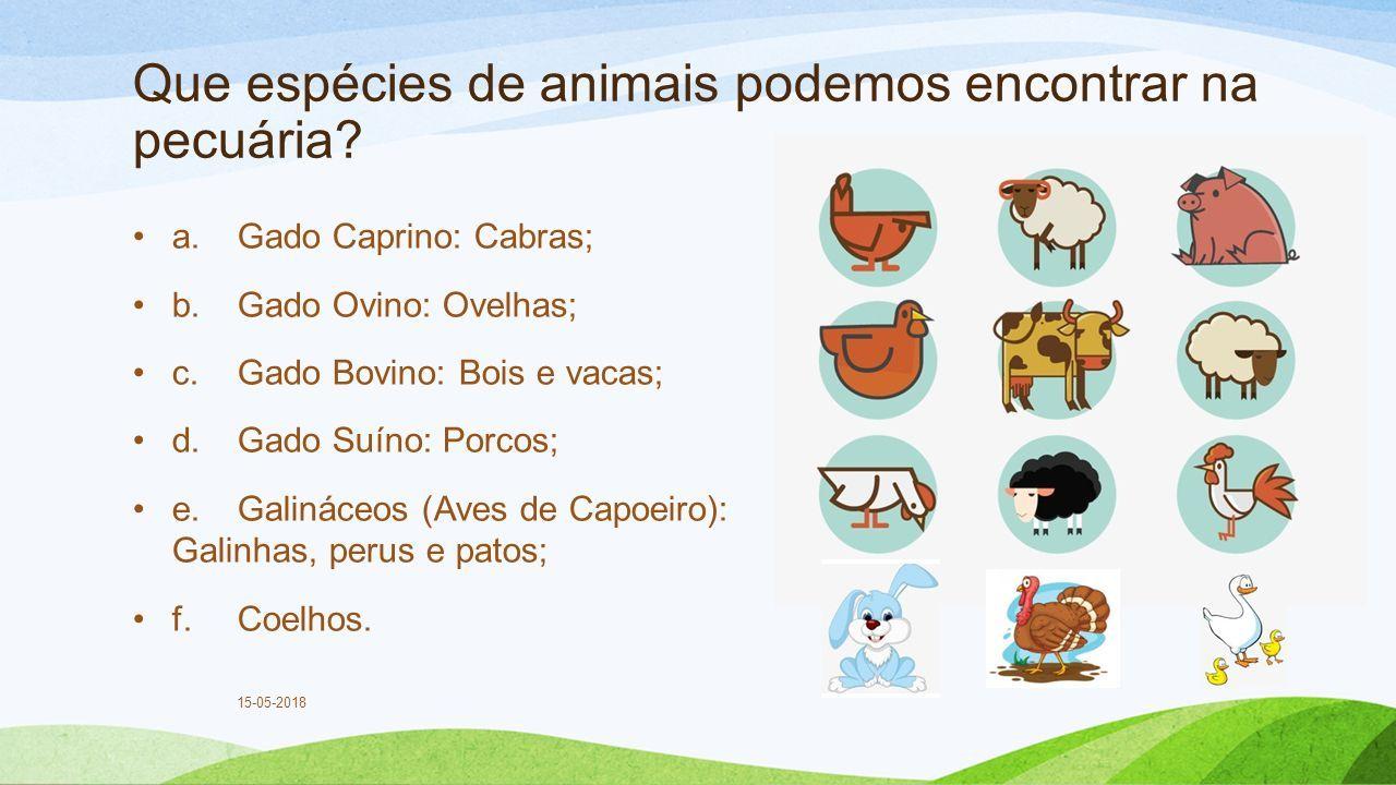 Que espécies de animais podemos encontrar na pecuária.