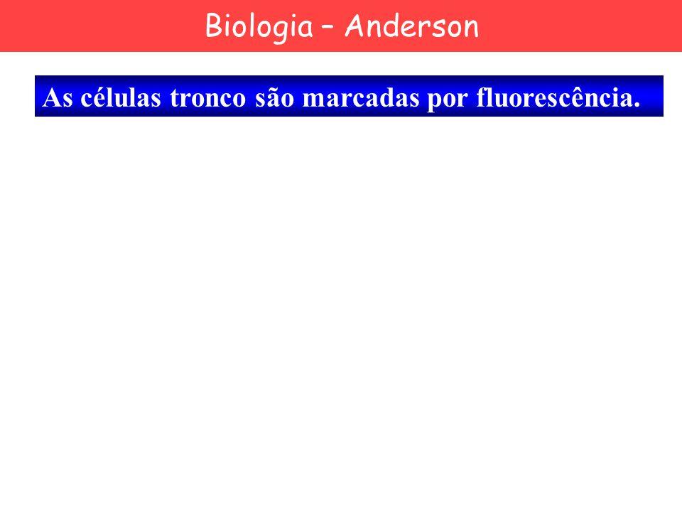 As células tronco são marcadas por fluorescência. Biologia – Anderson