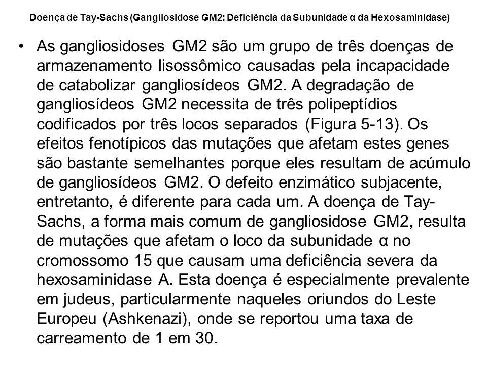Doença de Tay-Sachs (Gangliosidose GM2: Deficiência da Subunidade α da Hexosaminidase) As gangliosidoses GM2 são um grupo de três doenças de armazenam