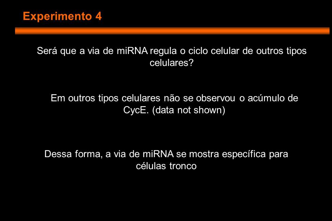 Experimento 4 Será que a via de miRNA regula o ciclo celular de outros tipos celulares.
