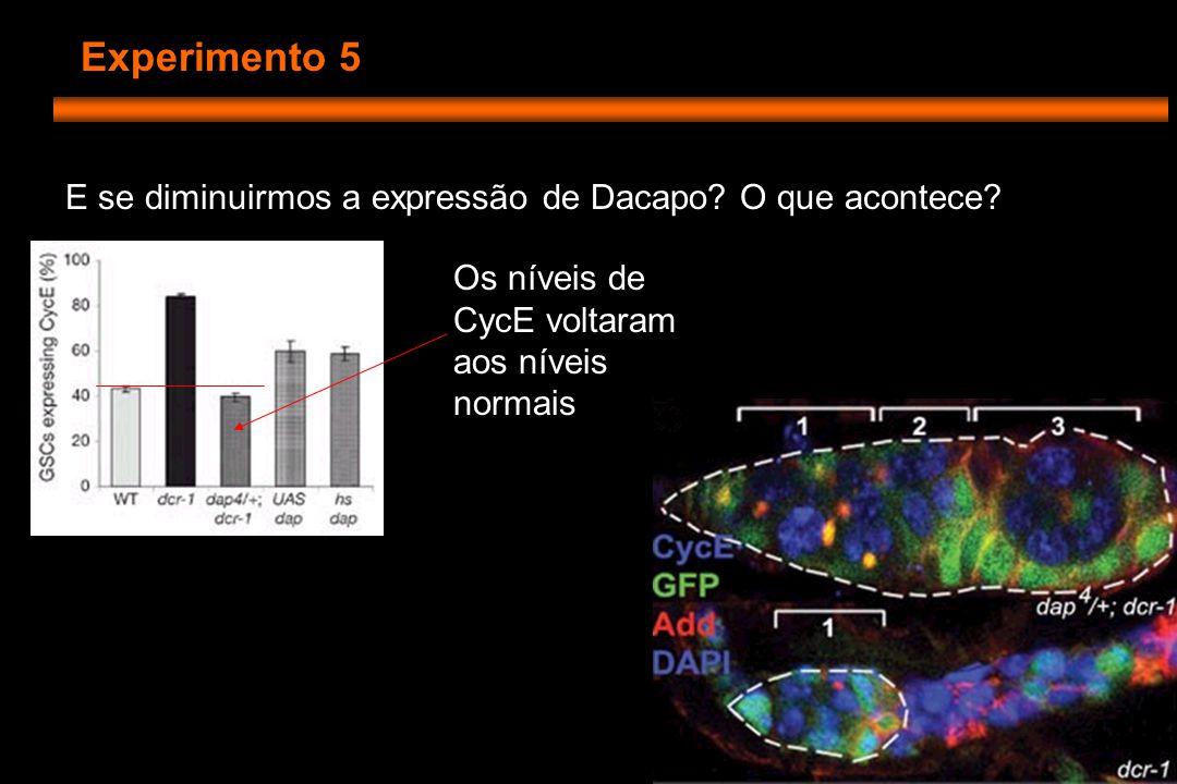 Experimento 5 E se diminuirmos a expressão de Dacapo.