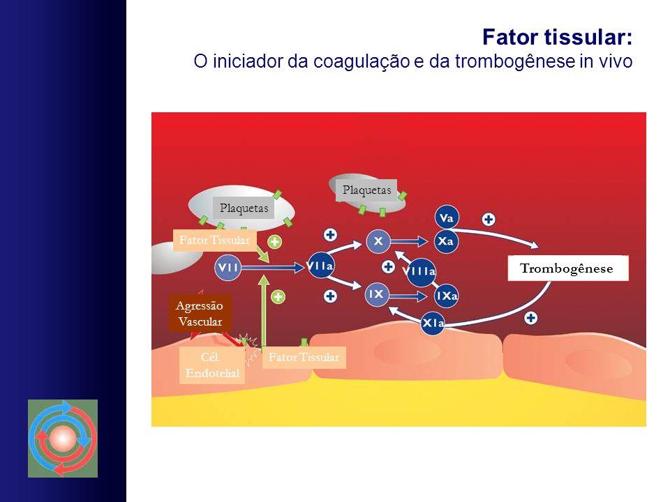 Fator tissular: O iniciador da coagulação e da trombogênese in vivo Plaquetas Trombogênese Agressão Vascular Fator TissularCél. Endotelial Fator Tissu