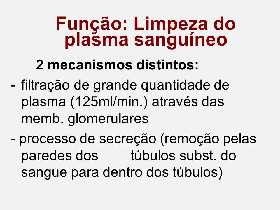 Função: Limpeza do plasma sanguíneo 2 mecanismos distintos: -filtração de grande quantidade de plasma (125ml/min.) através das memb.