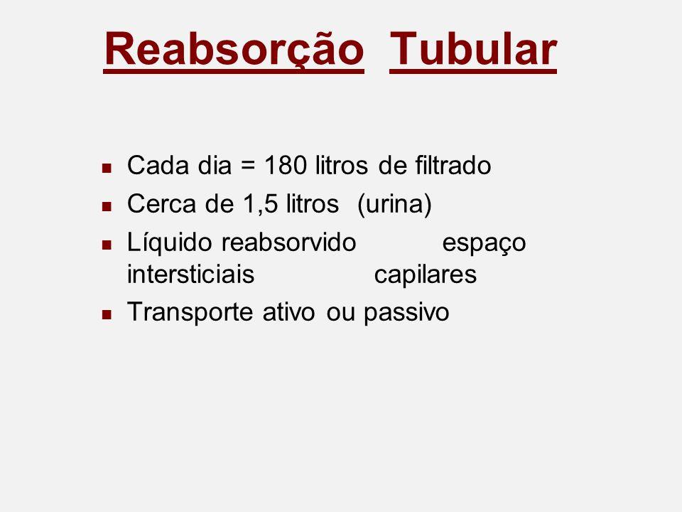 Reabsorção Tubular Cada dia = 180 litros de filtrado Cerca de 1,5 litros (urina) Líquido reabsorvidoespaço intersticiaiscapilares Transporte ativo ou passivo