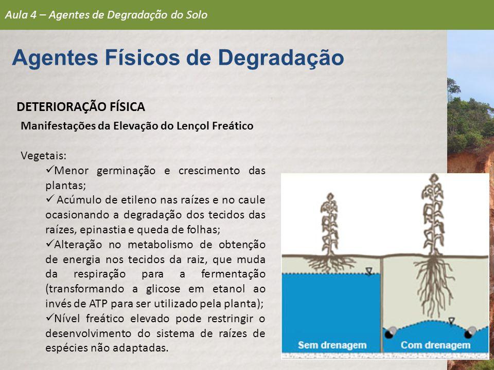 DETERIORAÇÃO FÍSICA Manifestações da Elevação do Lençol Freático Vegetais: Menor germinação e crescimento das plantas; Acúmulo de etileno nas raízes e