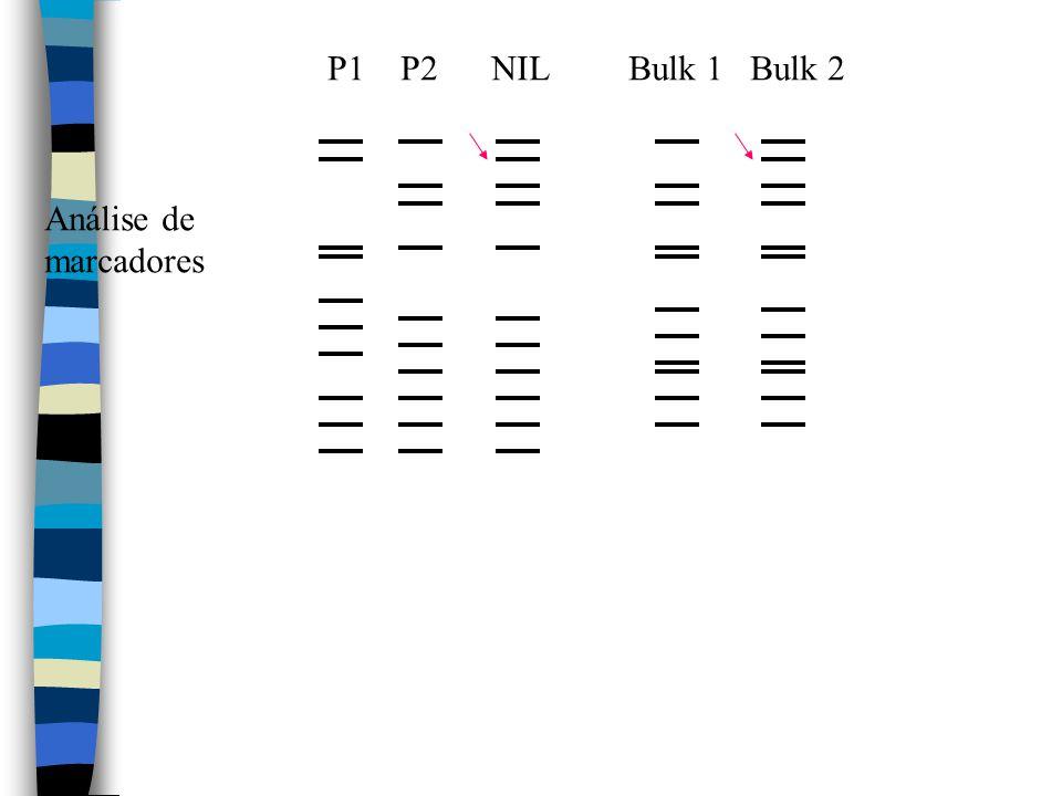 Análise de marcadores P1 P2 NIL Bulk 1 Bulk 2