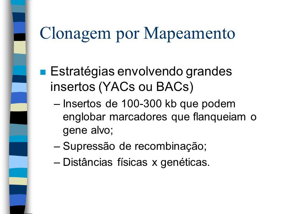 Clonagem por Mapeamento n Estratégias envolvendo grandes insertos (YACs ou BACs) –Insertos de 100-300 kb que podem englobar marcadores que flanqueiam