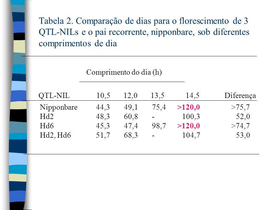 Tabela 2. Comparação de dias para o florescimento de 3 QTL-NILs e o pai recorrente, nipponbare, sob diferentes comprimentos de dia Comprimento do dia