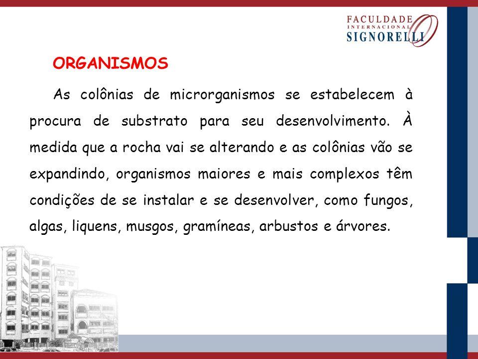 ORGANISMOS As colônias de microrganismos se estabelecem à procura de substrato para seu desenvolvimento. À medida que a rocha vai se alterando e as co