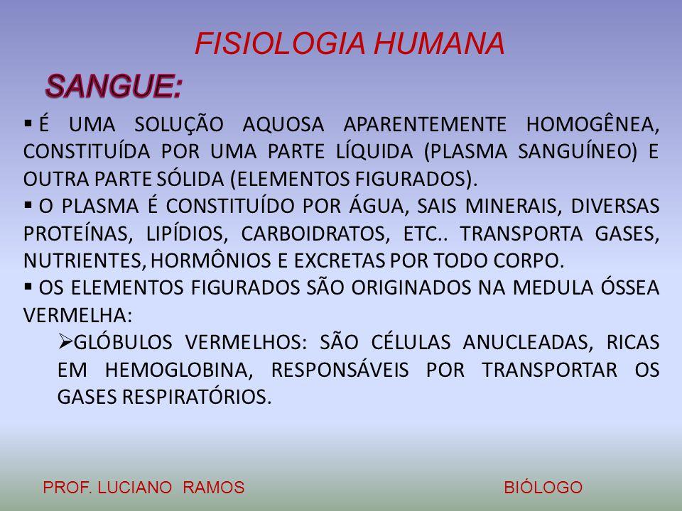 FISIOLOGIA HUMANA PROF. LUCIANO RAMOSBIÓLOGO  É UMA SOLUÇÃO AQUOSA APARENTEMENTE HOMOGÊNEA, CONSTITUÍDA POR UMA PARTE LÍQUIDA (PLASMA SANGUÍNEO) E OU