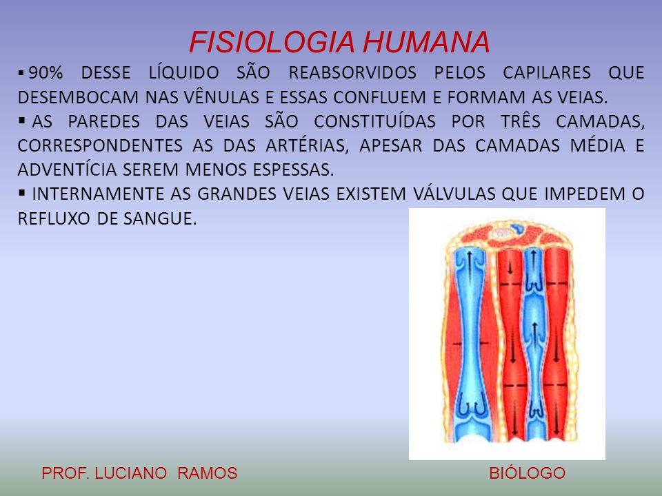 FISIOLOGIA HUMANA PROF. LUCIANO RAMOSBIÓLOGO  90% DESSE LÍQUIDO SÃO REABSORVIDOS PELOS CAPILARES QUE DESEMBOCAM NAS VÊNULAS E ESSAS CONFLUEM E FORMAM