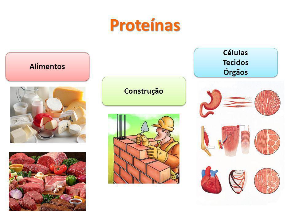 Proteínas Células Tecidos Órgãos Células Tecidos Órgãos Construção Alimentos