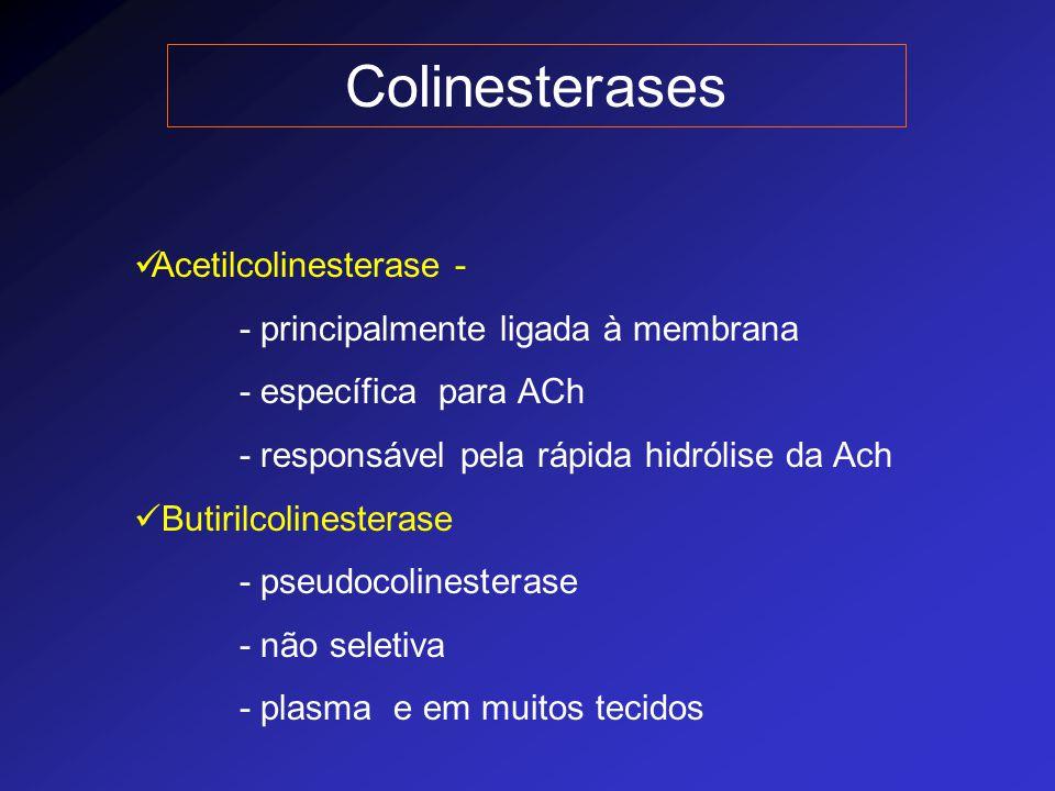 Colinesterases Acetilcolinesterase - - principalmente ligada à membrana - específica para ACh - responsável pela rápida hidrólise da Ach Butirilcoline