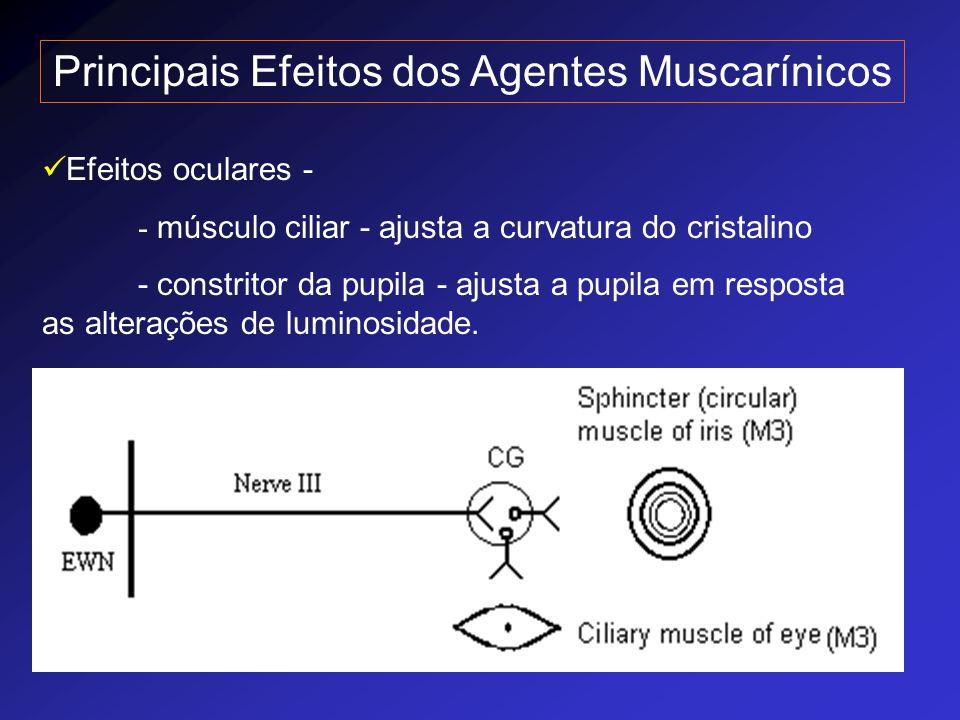 Principais Efeitos dos Agentes Muscarínicos Efeitos oculares - - músculo ciliar - ajusta a curvatura do cristalino - constritor da pupila - ajusta a p