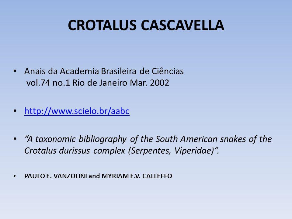 A Brazilian Rattle-snake (Clarke) Crotalus cascavella of Mure - species uncertain (T.F.Allen) Cascavel Sul-Americana (Crotalus durissus )